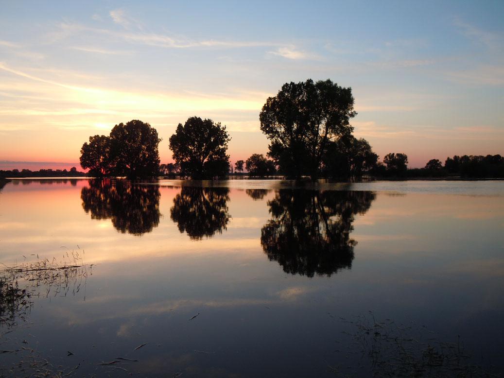 Hochwasser an der Aller / Foto: Klaus Jarchow