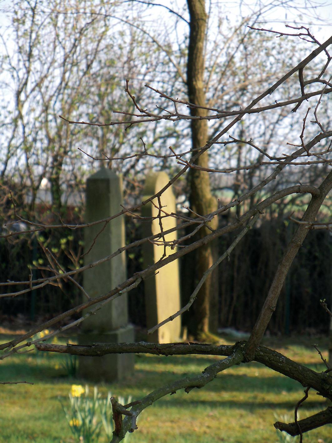Der jüdische Friedhof in Wohlendorf / Bild: Margret Dannemann-Jarchow