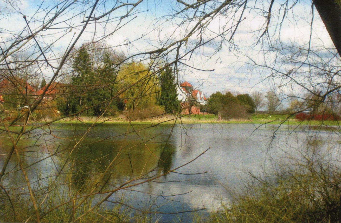 Blick auf die Spritzenwiese bei ablaufendem Hochwasser / Foto: Dieter Moll